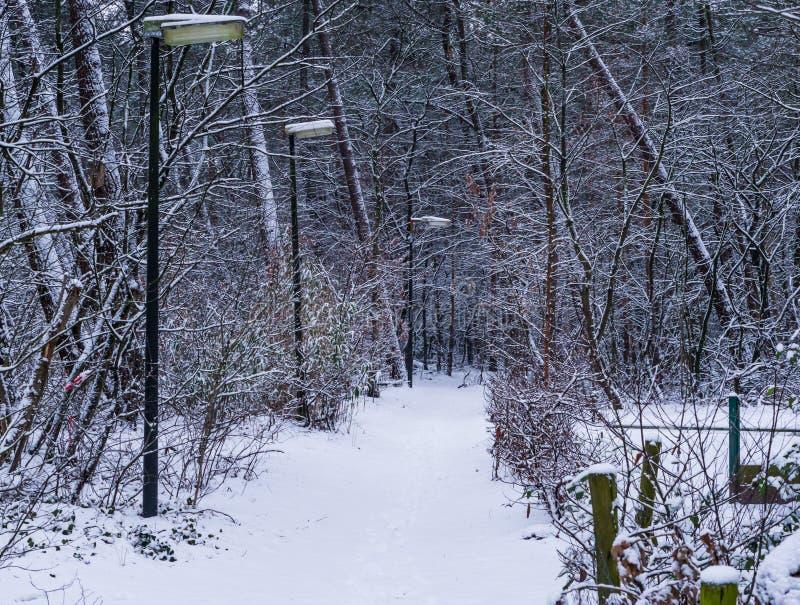 Mooie sneeuw bosweg met unlitlantaarnpalen, wintertijd in het hout, sneeuw boslandschap stock foto's
