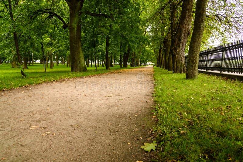 Mooie steeg in Park in bewolkte de zomerdag stock afbeelding