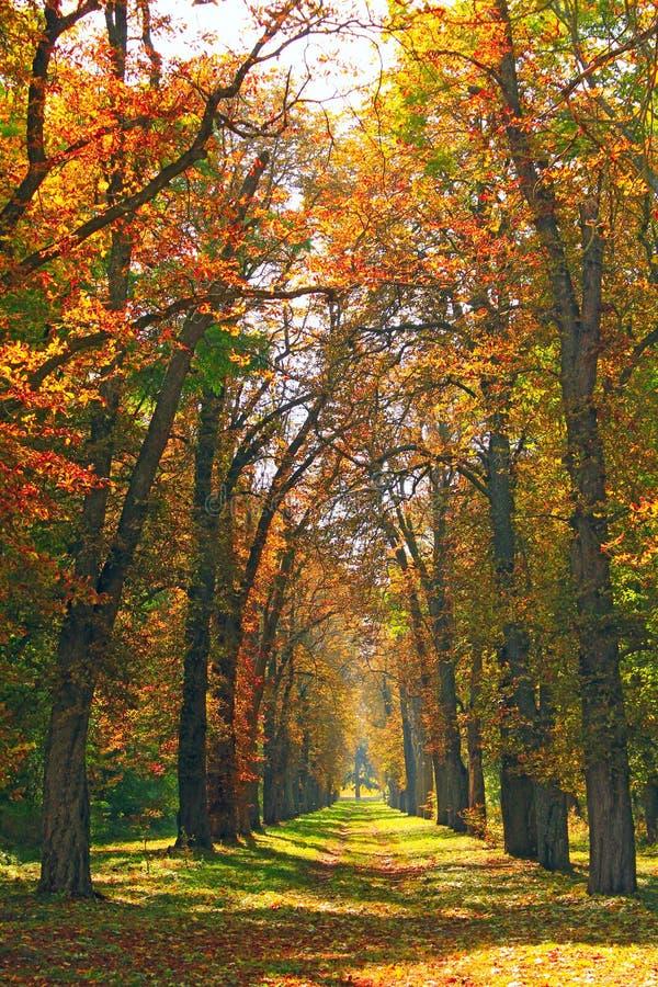 Mooie steeg in park met kleurrijke bomen die zich in geel gebladerte bevinden royalty-vrije stock afbeeldingen