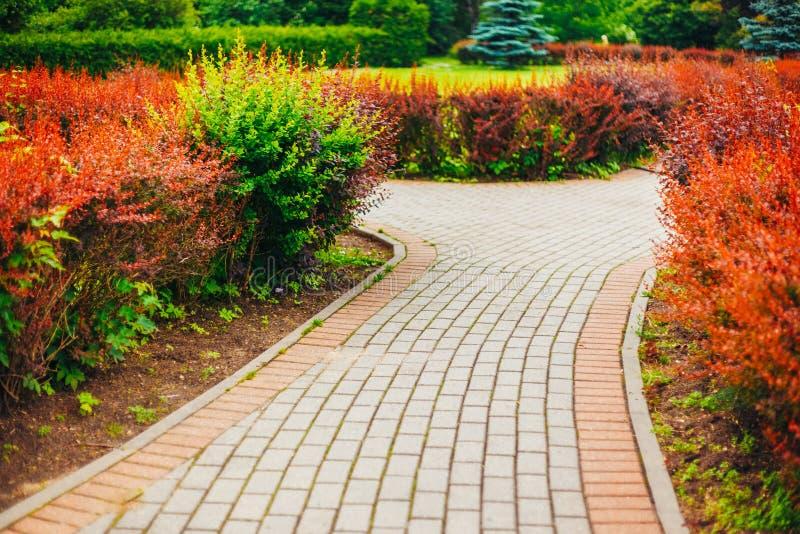 Mooie steeg in park Tuin het Modelleren Ontwerp royalty-vrije stock afbeelding
