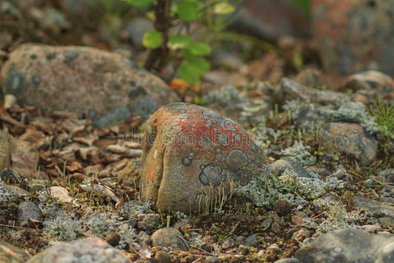 Mooie steen met mos stock foto
