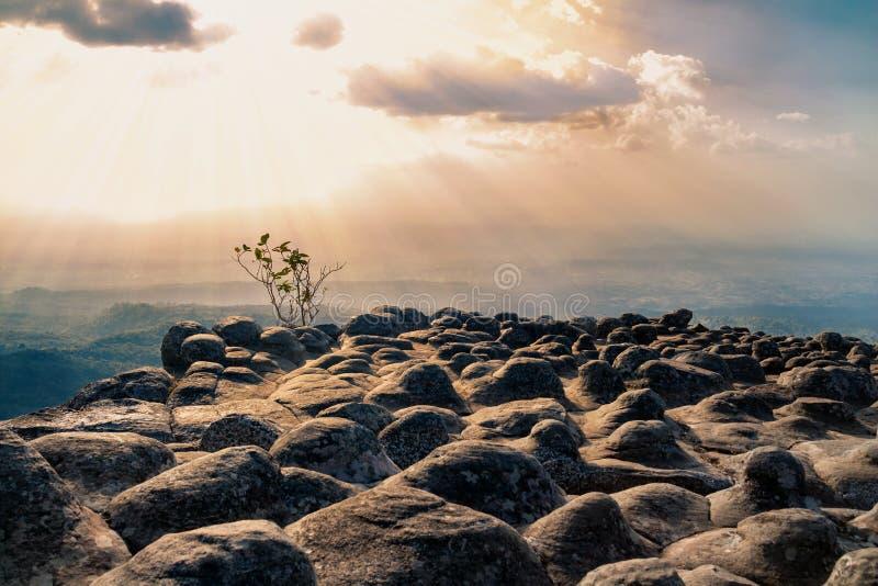 Mooie steenklip bij zonsondergang met bos en bergbackgro stock afbeeldingen