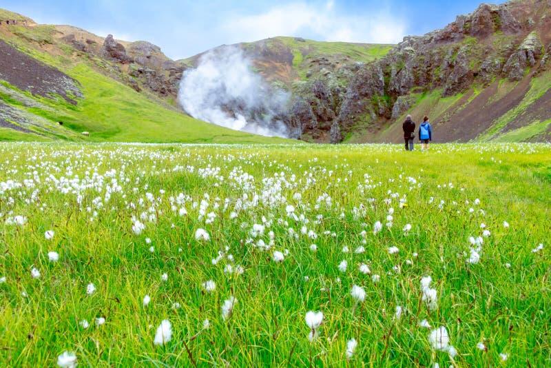 Mooie Stoomvallei van Zuid-IJsland Reykjadalurvallei, stock afbeelding