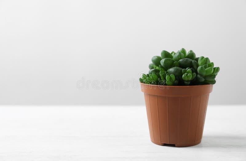 Mooie succulente installatie in pot op witte lijst tegen lichte achtergrond, ruimte voor tekst royalty-vrije stock foto's