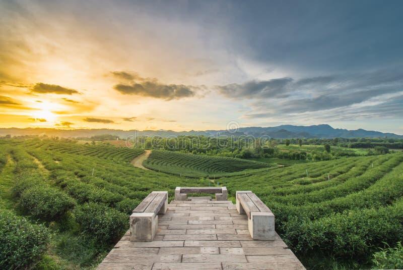 Mooie sunsets in Chui Fong Tea Plantation royalty-vrije stock fotografie