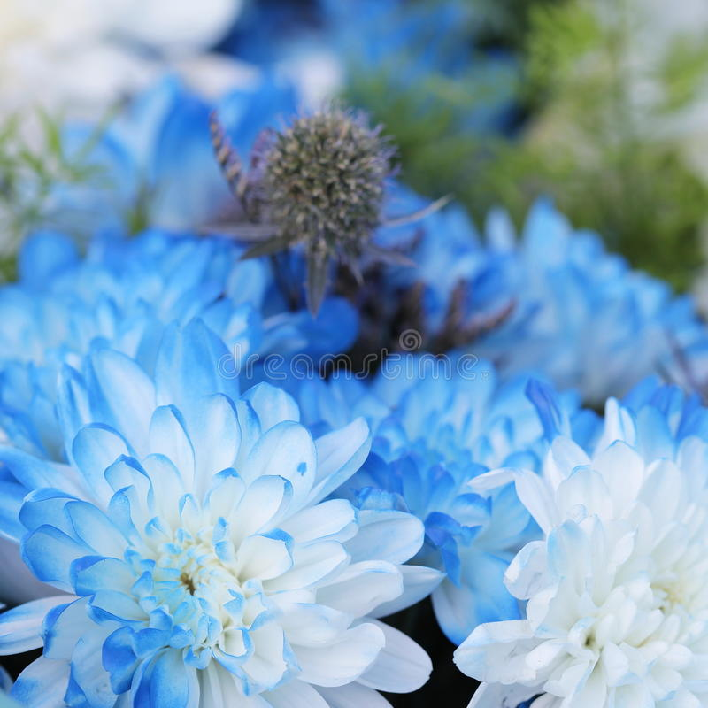 Mooie tedere blauwe bloemenachtergrond stock foto's