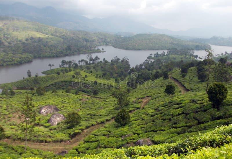 Mooie theeaanplantingen op de banken van een rivier royalty-vrije stock afbeeldingen