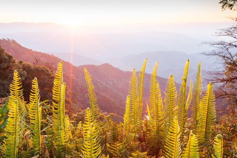Mooie Tijd Helder en kleurrijk toneellandschap De gouden zonsopgang glanst rond de bergen en de tropische bos, verse varen stock foto's