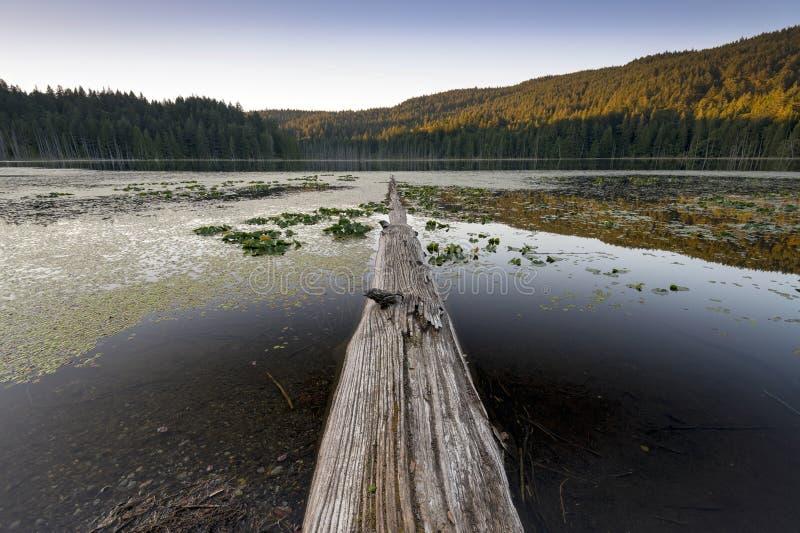 Mooie toneelscapes van het Vreedzame Eiland van Noordwesten Britse Colombia Canada Bowen stock afbeelding