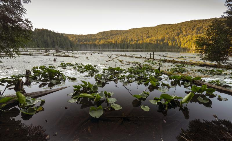 Mooie toneelscapes van het Vreedzame Eiland van Noordwesten Britse Colombia Canada Bowen royalty-vrije stock afbeeldingen