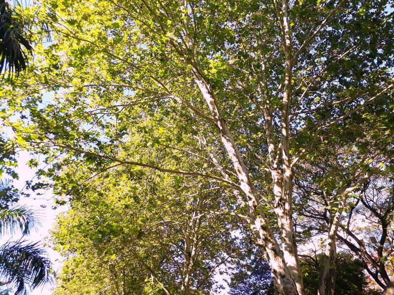 Mooie treetop royalty-vrije stock afbeelding