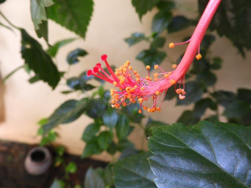 Mooie trillende bloem royalty-vrije stock foto