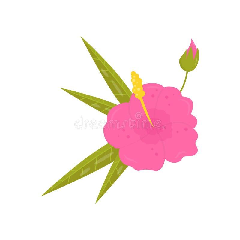 Mooie tropische bloem Bloeiende hibiscus met heldere roze bloemblaadjes en groene bladeren Vlak vectorelement voor affiche of royalty-vrije illustratie