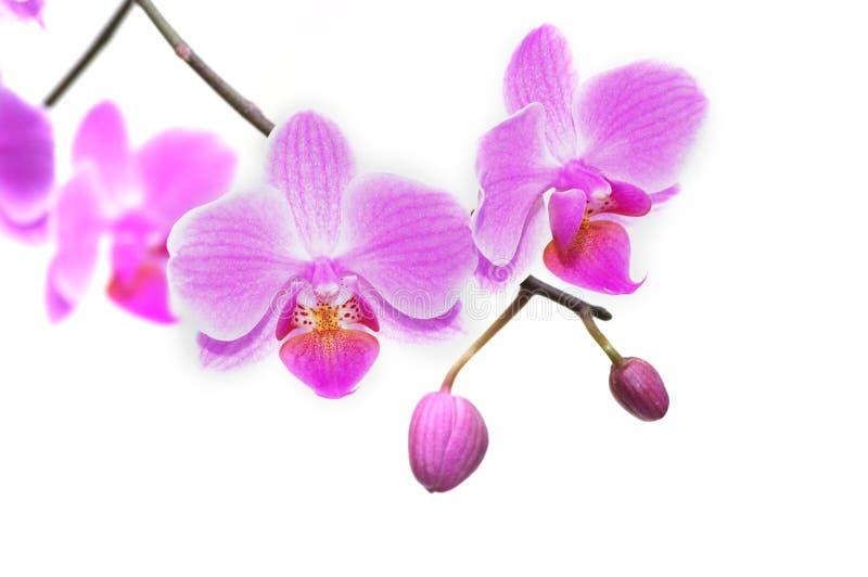 Mooie tropische orchideeën stock foto