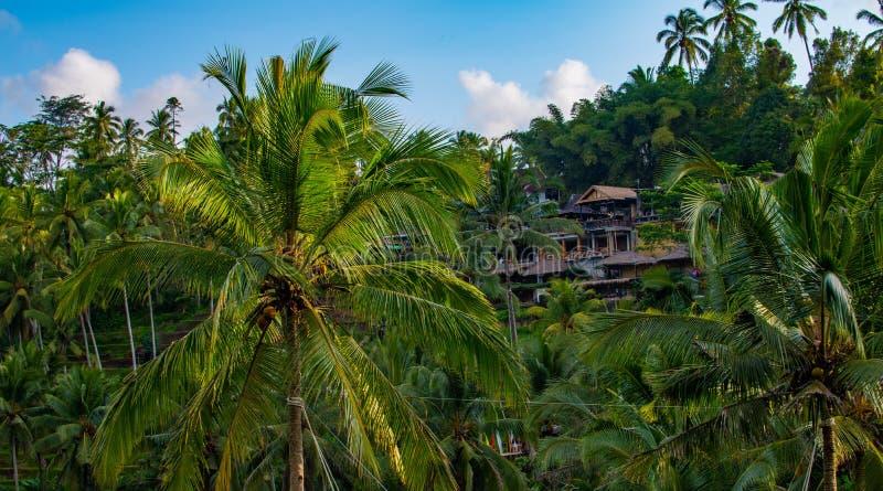Mooie tropische palmen bij hemel dichtbij Aziatisch huis royalty-vrije stock foto