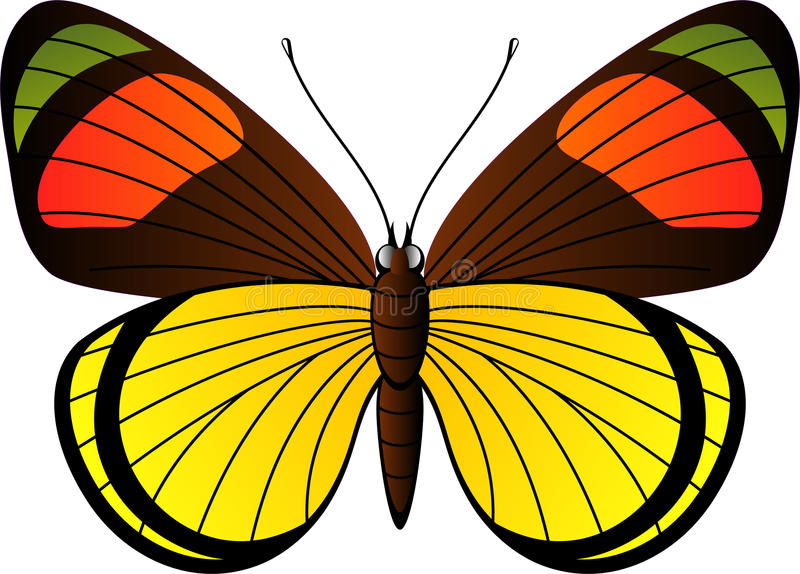 Mooie tropische vlinder royalty-vrije illustratie
