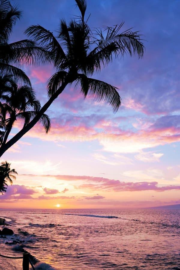 Mooie Tropische Zonsondergang royalty-vrije stock afbeelding