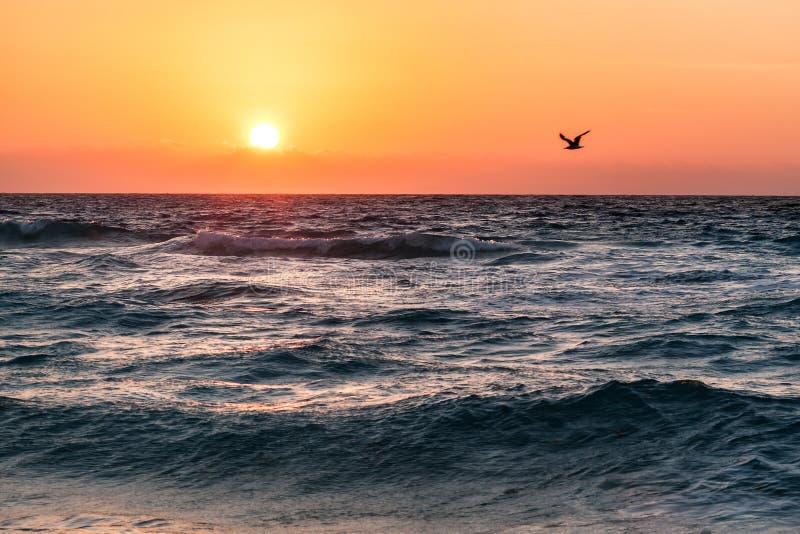 Mooie tropische zonsopgang op het strand over oceaan, Mexico royalty-vrije stock afbeeldingen