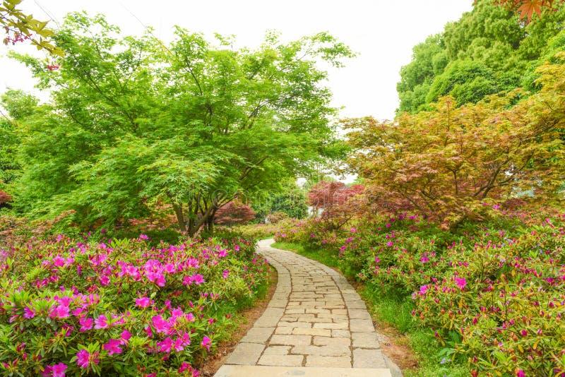 Mooie tuin stock afbeeldingen
