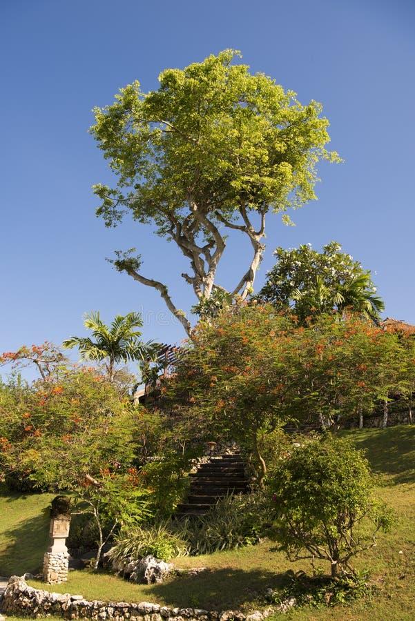 Mooie tuin, Bali royalty-vrije stock fotografie