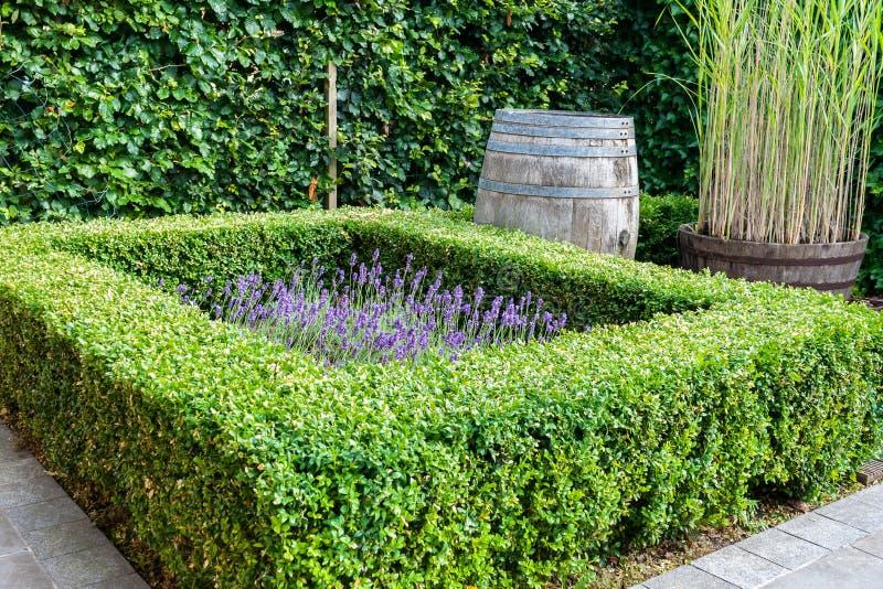 Mooie tuin met altijdgroene bukshoutinstallaties stock foto's