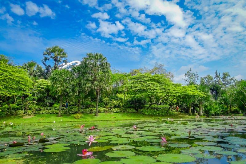 Mooie tuin met een kunstmatig meer met vele die Leliestootkussens in het water in Marina Bay Sands in Singapore wordt gevestigd royalty-vrije stock foto's