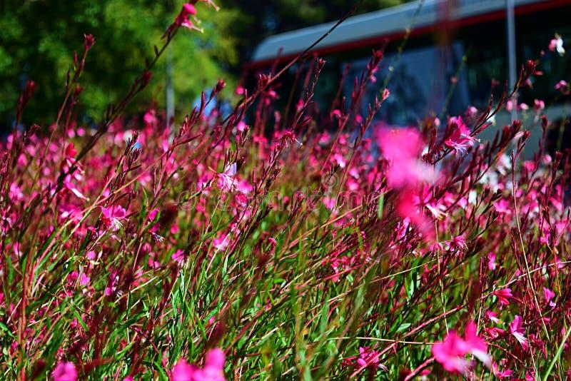 Mooie tuin met kleine roze bloemen royalty-vrije stock afbeelding