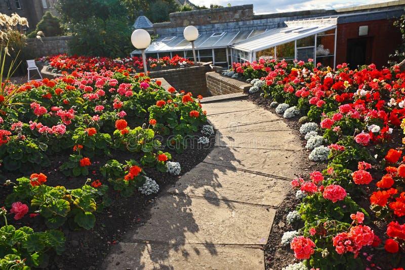 Mooie tuin met rode geraniumbloemen stock afbeelding