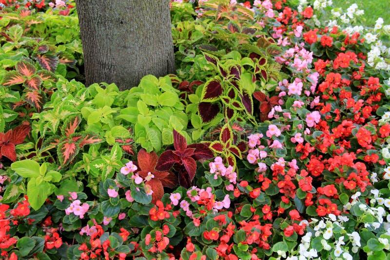 Mooie tuin van bloemen en installaties rond bomen in binnenplaats royalty-vrije stock fotografie
