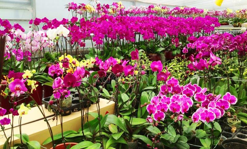 Mooie Tuin van Orchideeën stock fotografie