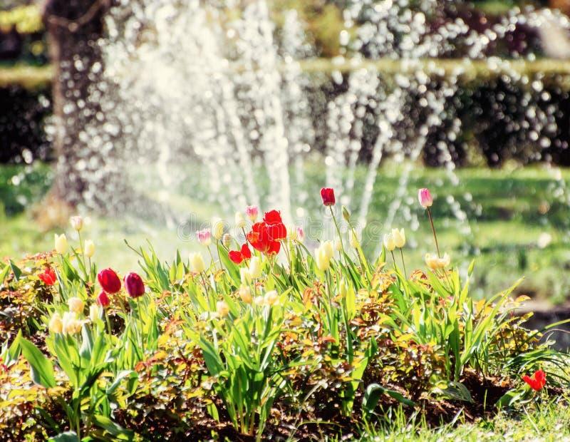 Mooie tulpen en fontein, natuurlijke scène royalty-vrije stock foto