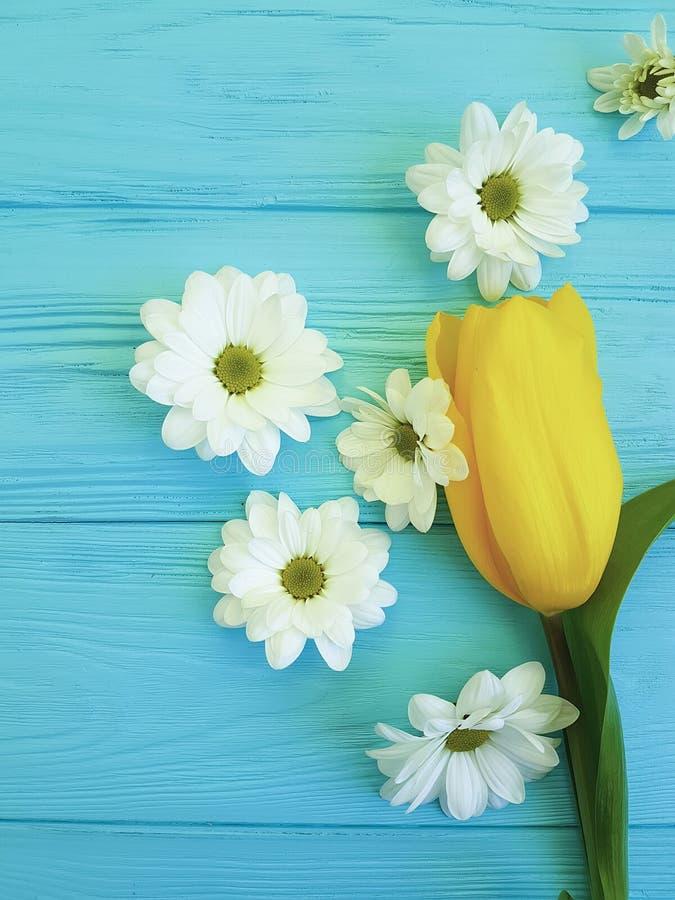 Mooie tulpen van de dag van de groetmoeders van de chrysantenviering, op een blauwe houten achtergrond stock afbeeldingen