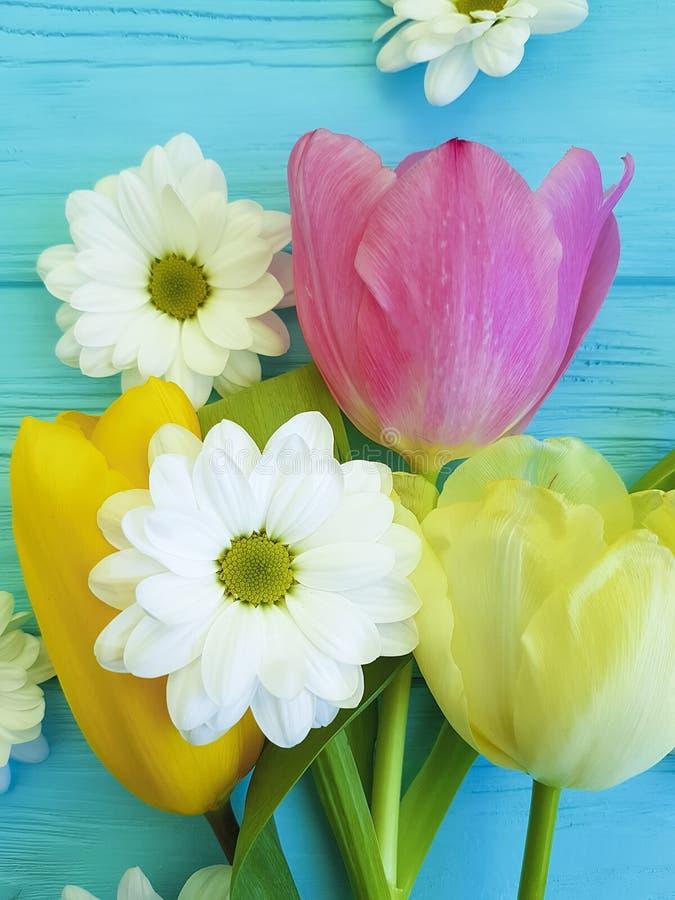 Mooie tulpen van de dag het seizoen van van de achtergrond chrysantenviering groetmoeders, op een blauwe houten achtergrond stock afbeelding