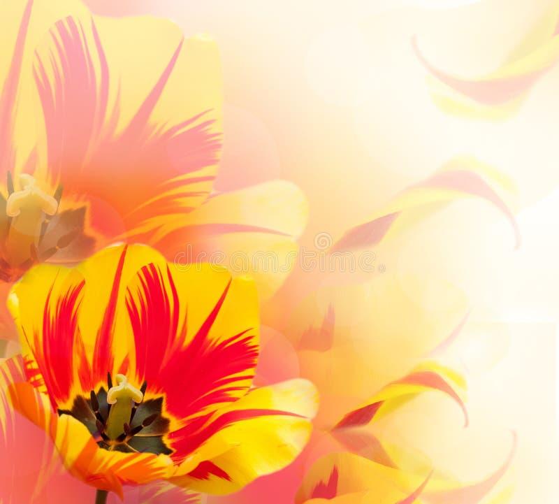 Download Mooie tulpenachtergrond stock afbeelding. Afbeelding bestaande uit kleur - 29509639