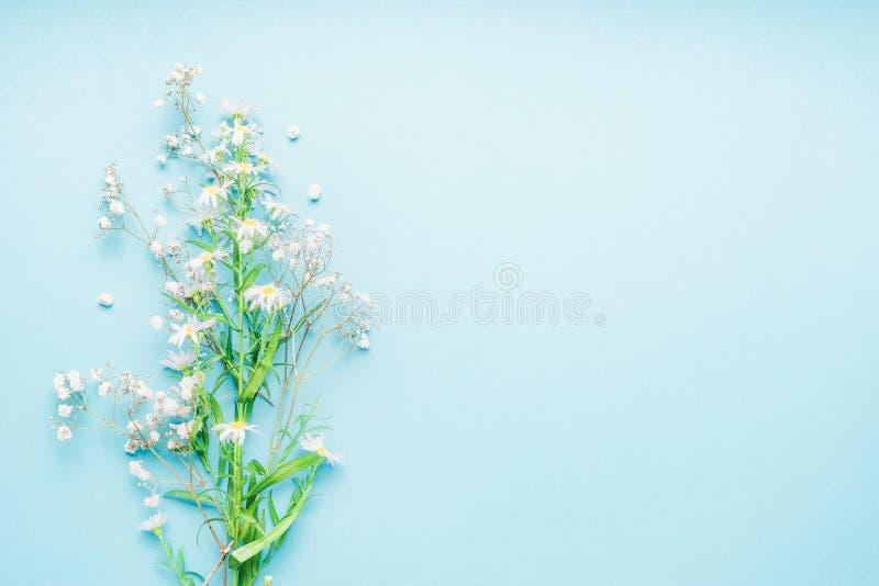 Mooie turkooise achtergrond met bos van wilde madeliefjesbloemen, hoogste mening stock foto