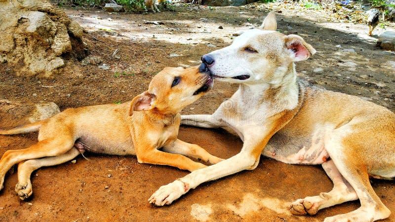 Mooie Uitdrukking met Grappige hond stock foto