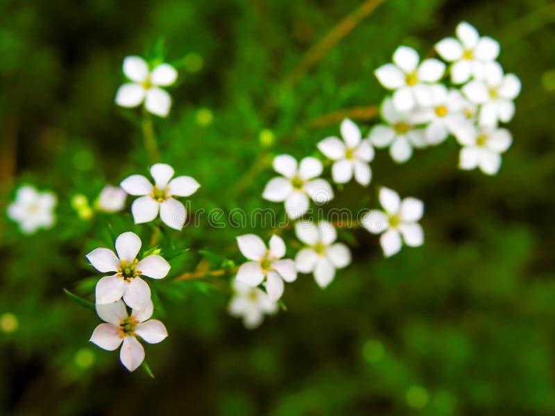 Mooie uiterst kleine bloemen 2 stock afbeeldingen
