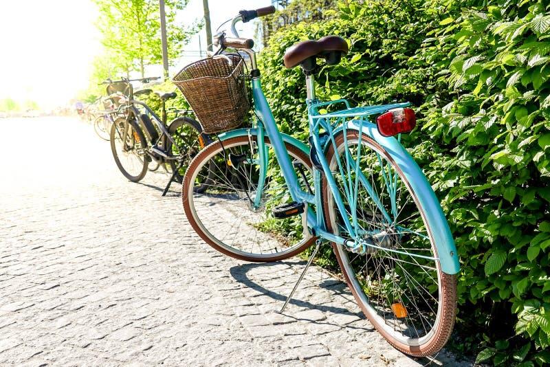 Mooie uitstekende die retro fiets door een groene struik wordt geparkeerd stock afbeeldingen