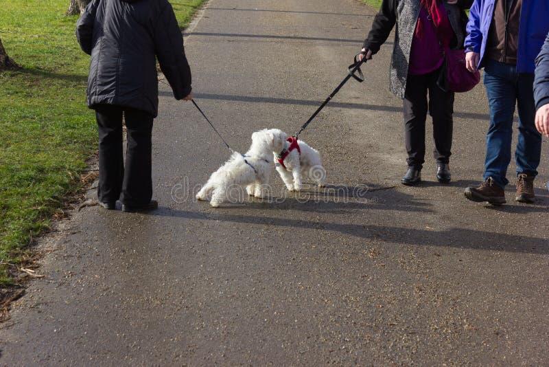 mooie unieke honden die een gang in stadspark hebben royalty-vrije stock fotografie
