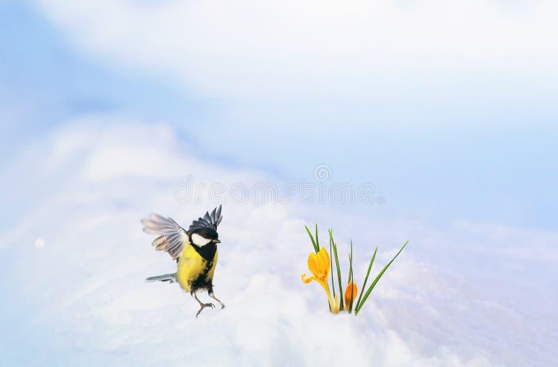 Mooie vakantiekaart met een kleine vogelmees die wijd het uitspreiden van zijn vleugels over de eerste gevoelige gele bloemenkrok royalty-vrije stock foto