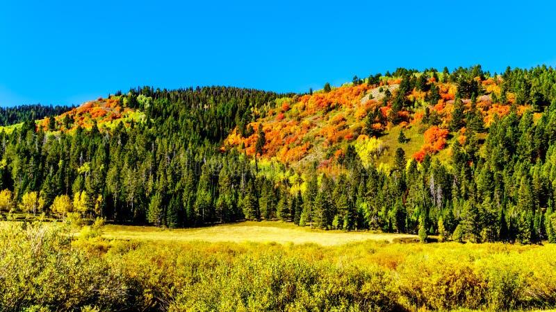 Mooie valkleuren op de heuvel langs Highway 89 in Wyoming stock afbeelding