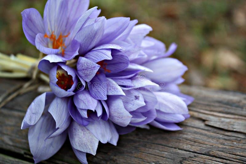 mooie van de de droomflora van de schoonheidsbloei de bloementuin stock fotografie