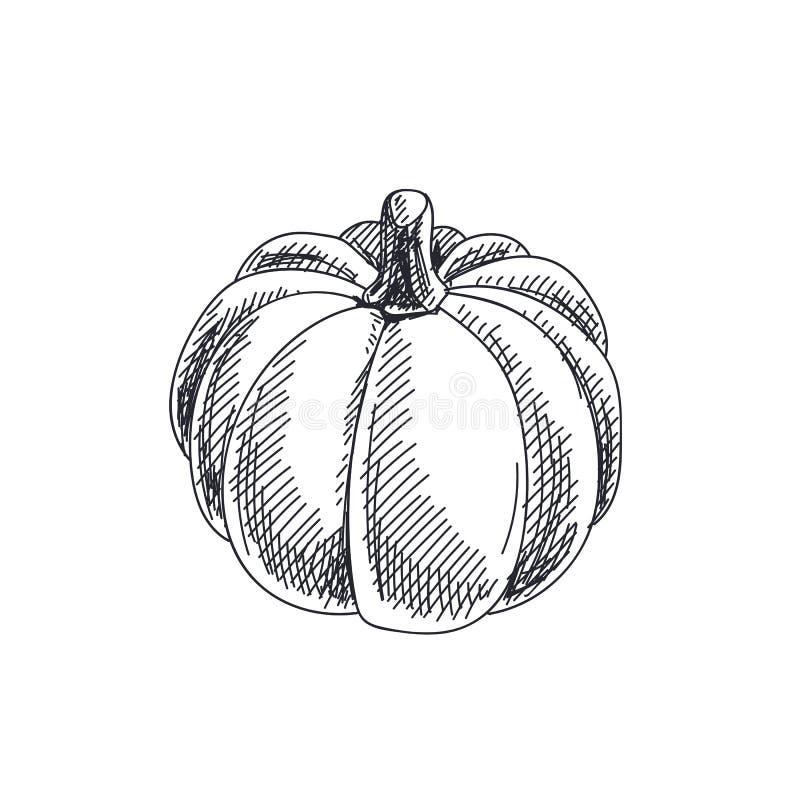 Mooie vectorhand getrokken groentenillustratie stock illustratie