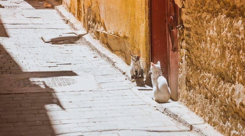 Mooie verdwaalde kattenslaap op de straten van Marokko royalty-vrije stock foto's