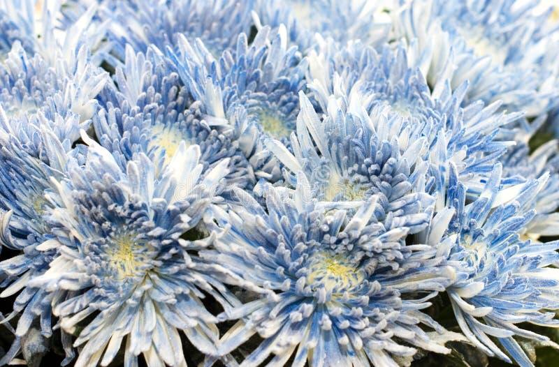 Mooie verse bloemen in een boeket stock afbeelding