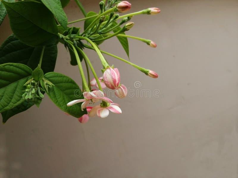 Mooie verse bloemen op een installatie royalty-vrije stock foto