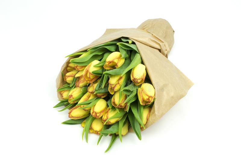 Mooie verse gele die tulpen op witte achtergrond worden ge?soleerd royalty-vrije stock afbeelding