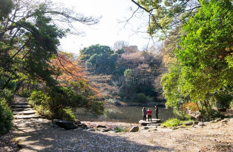 Mooie vijver in tuin binnen de Universiteit van Tokyo De bejaarden houden van te lopen en te ontspannen stock foto