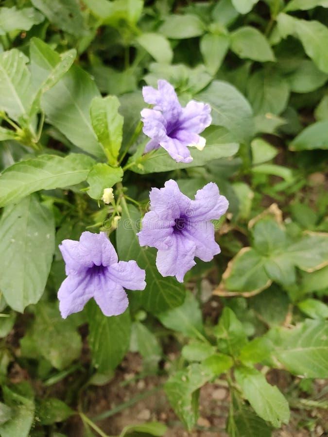 Mooie violette bloemen in de de zomerdag stock afbeelding
