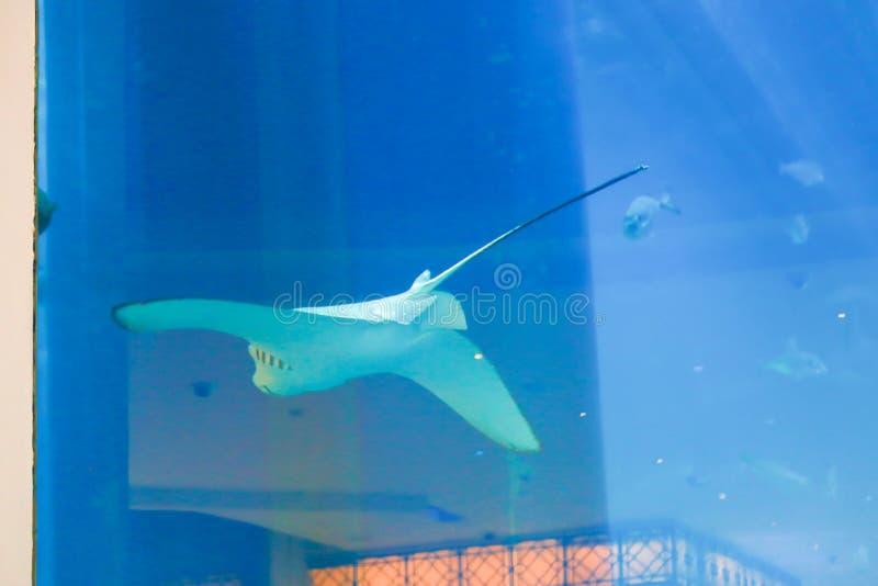 Mooie Vissen - Aquarium Doubai stock foto
